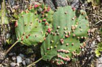 Ötökkätieto – Ötökkäryhmät Fruit, Plants, Plant, Planets