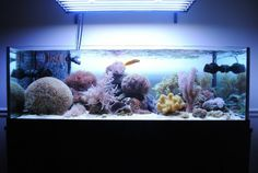 Made in Africa - A Shallow Reef Marine Aquarium, Marine Fish, Reef Aquarium, Aquarium Fish Tank, Saltwater Tank, Saltwater Aquarium, Reef Aquascaping, Salt And Water, Softies