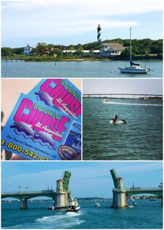 watch the dolphins on the Scenic Cruise in St. Augustine, FL