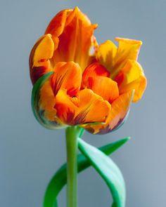 192 vind-ik-leuks, 21 opmerkingen - Pauline (@cloverhome.nl) op Instagram: 'Goodmorning! Birds are singing, spring is definitely in the air.' Tulips, Singing, Birds, Rose, Flowers, Plants, Blog, Instagram, Pink
