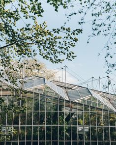 Blue skies over the incredible glasshouse at @hortusamsterdam and the promise that we will share our Amsterdam travels on our website very soon... just as soon as we stop in one place for more than a couple of hours  #HaarkonGreenhouseTour #HaarkonInAmsterdam
