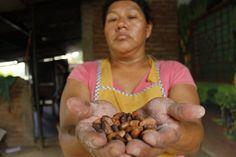 La Caja de Pandora: El futuro sabe a chocolate para mujeres rurales sa...