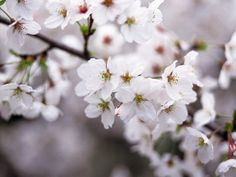 Sweet smelling blossoms