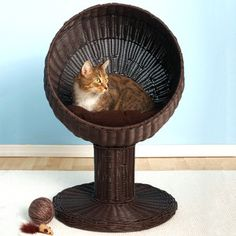 Kitty Ball Bed Espresso now featured on Fab.