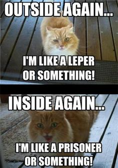 In or out, cat! It's so true xD