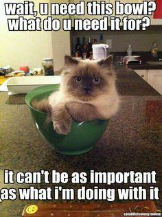 Ha ha my cat