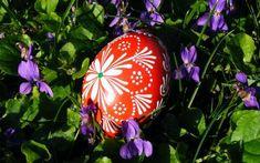 húsvét ibolya tavasz tavaszi virág