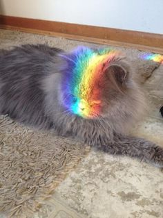 """""""Are you kidding me? A rainbow? Yuck."""""""