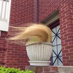 Donald Trump Foliage