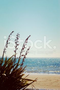 New Zealand Seascape, Retro Feel royalty-free stock photo Abel Tasman National Park, New Zealand Beach, Kiwiana, Beach Fun, Image Now, Beautiful Beaches, Filter, Flora, National Parks