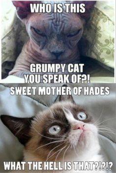 Lol grumpy :D
