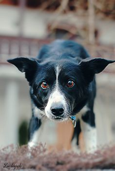 Dog © Copyrighted by linnfotografi.blogg.no