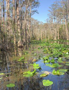 Okefenokee Swamp, Steven Foster State Park, Georgia