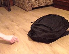 nice black cat sneak surprise attack from backpack animated gif