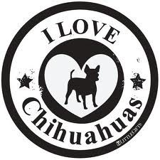 I love hihuahuas - Google Search