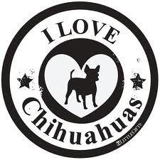 I love hihuahuas - Google Search