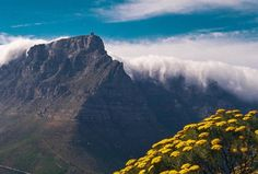 #Repost @jessheadley      #girlswhotravel #workingabroad #lovetravel #travellife #worldtraveler #travelaroundtheworld #travelblogger #traveler #globetrotter #shiplife #cruise #wanderlust #nomad #landscapelovers #landscapephotography #35mm #35mmfilm #filmphoto #film #filmisnotdead #filmphotography #TableMountain #LionsHead #hike #mountainlife #CapeTown #SouthAfrica #Africa
