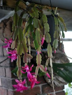 Most Hot Hanging Plants Ideas at the End of the Year Most Hot Hanging Plants Ideas at the End of the Most Hot Hanging Plants Ideas at the End of the YearGardening is a fun hobby for Hanging Flowers, Fern Plant, Small Garden, Hanging Plants, Plants, Geranium Flower, Orchid Flower, Flowers, Ornamental Plants