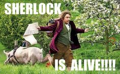 Sherlock is alive! Run little Hobbit! And then he would punch him in the face. :)