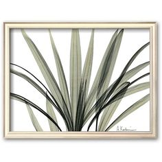 Art.com ''Mini Palm Tree'' Framed Art Print by Albert Koetsier... ($107) ❤ liked on Polyvore featuring home, home decor, wall art, art, frame, champagne, handmade home decor, wooden home decor, wooden wall art and miniature palm trees