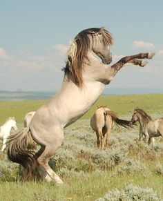 Brislawn Spanish Barb Mustang stallion - God made the horse from the breath of the wind, the beauty of the earth, the soul of an angel.