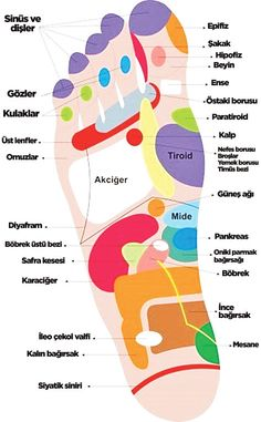 What is foot reflexology? We explain all facts! Health Facts, Health Diet, Health And Wellness, Health Fitness, Save Your Life, Foot Reflexology, Reiki, Alternative Treatments, Massage Therapy