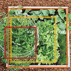 Grow veggies in a tiny bed