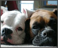 Boxers: best buds