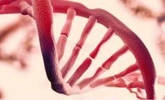+ - Muitos acreditam que o nosso DNA esconde toda a informação necessária que eventualmente irá nos ajudar a descobrir nossas origens, significado, e propósito no Universo. O estudo do DNA é algo fascinante e somente nos últimos anos cientistas têm feito grandes progressos para decifrar tudo que o DNA esconde. Há pouco tempo, pesquisadores …