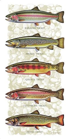 Five Trout Panel Painting - Five Trout Panel Fine Art Print. Really nice fish art! Trout Fishing Tips, Fly Fishing Gear, Gone Fishing, Fishing Lures, Fishing Stuff, Fishing Basics, Fishing Knots, Fishing Tricks, Fishing Tackle