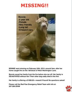 ((URGENT-LOST DOG)) *REWARD* Family searches for their dog, Bonnie, who disappeared after saving them from fire that burned their home.  She's a 2 yr old pit bull in (Germantown) Philadelphia, PA. $1,000 reward is offered for information which successfully brings this beloved family pet back home. Anyone who believes that they have spotted Bonnie is asked to call Red Paw Emergency Relief Team 267-289-2PAW.