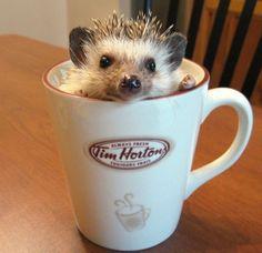 Hedgehog #Coffee