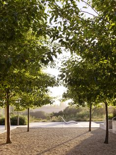 A stand of precisely planted ornamental pear trees frames a view of the rolling landscape around Baker Lane, a Sonoma residence that's also home to an oil-producing olive orchard, vineyard, and organic garden. Landscape design by Andrea Cochran. Photo by Marion Brenner. Featured on www.gardendesign.com.