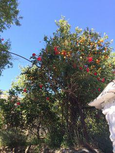 ¡Rosas y naranjas!