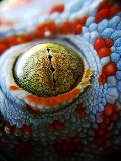 Colorful  Reptilian.