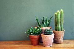 La succulente, la plante grasse, astuces déco , et conseil d'entretien. Mettre en avant ses cactées et plantes grasses dans des pots en terre brut.