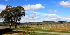 Turkey Flat Vineyards- My place of employment before retirement