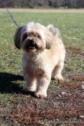 Barney is an adoptable Bichon Frise Dog in Nevada, IA. All of our dogs are either spayed or neutered. They have been given a distemper and bordetella vaccination, flea treatment, and have been wormed....