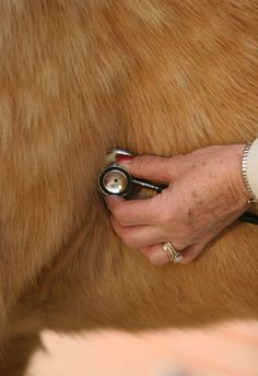How to Check your Horses' Vital Signs and Prevent Lameness
