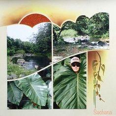 Végétation guadeloupéenne, gabarit Paysage de Perle de Sable