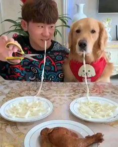 Cute Funny Dogs, Cute Funny Animals, Cute Baby Animals, Cute Animal Videos, Funny Animal Pictures, Perro Papillon, Chien Golden Retriever, Retriever Dog, Funny Dog Videos
