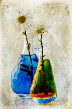 Daisies: Raided IKEA for unusual glass vases, Inkjet refill kit for the colouring, Garden for the flowers.