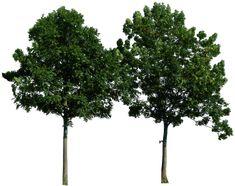 Tree 49 png by gd08.deviantart.com on @deviantART