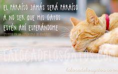 El paraíso y los gatos