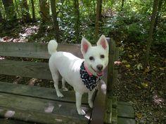 LOVES THE PARK, MY ESKIE, NIKI DOGG.