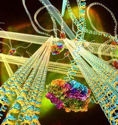 Um Flubber de DNA