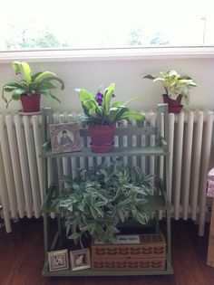 Lack of internal windowsills means the Plant Theatre gets some use