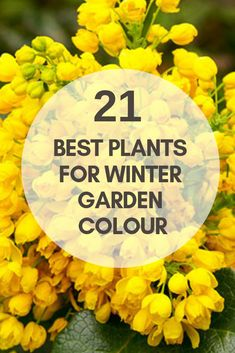 Winter flowers garden - The best plants for winter garden colour – Winter flowers garden Colorful Plants, Colorful Garden, Cool Plants, Plants For Fall, Colorful Flowers, Beautiful Flowers, Winter Flowers, Winter Colors, Spring Flowers