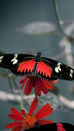 flower_butterfly_flight_pattern_