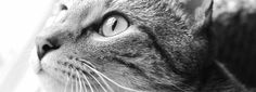 Recipes - cat nutrition | raw cat food